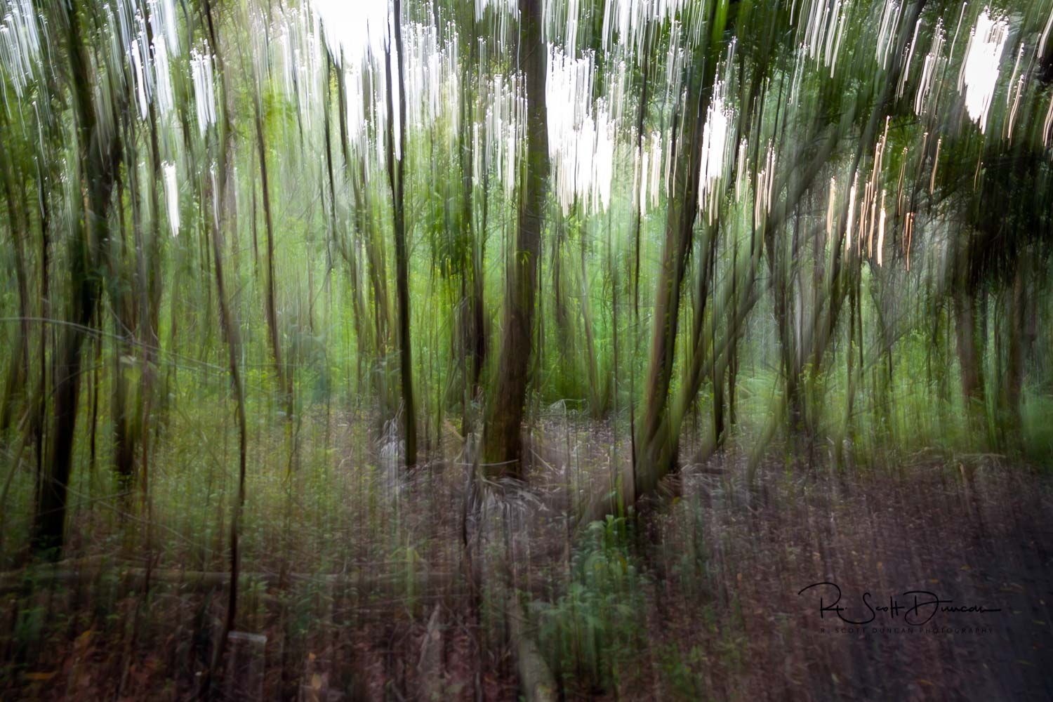 deep-forest-woods-abstract-photo.jpg