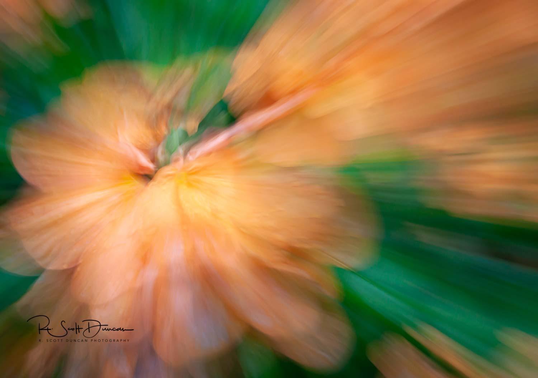 peach-flower-zoom-abstract-crop-photo.jpg
