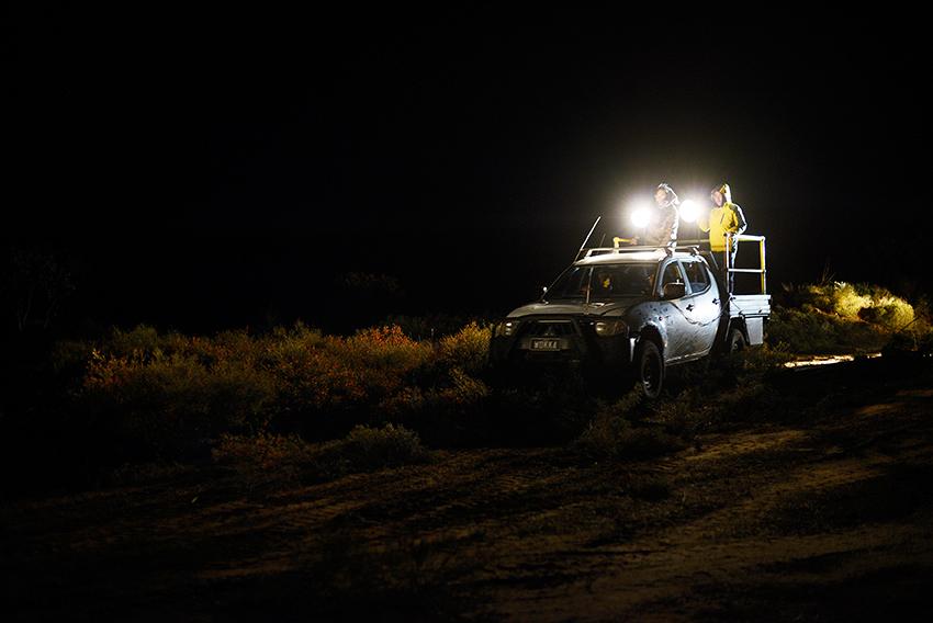 26. Night Spotlighting.jpg