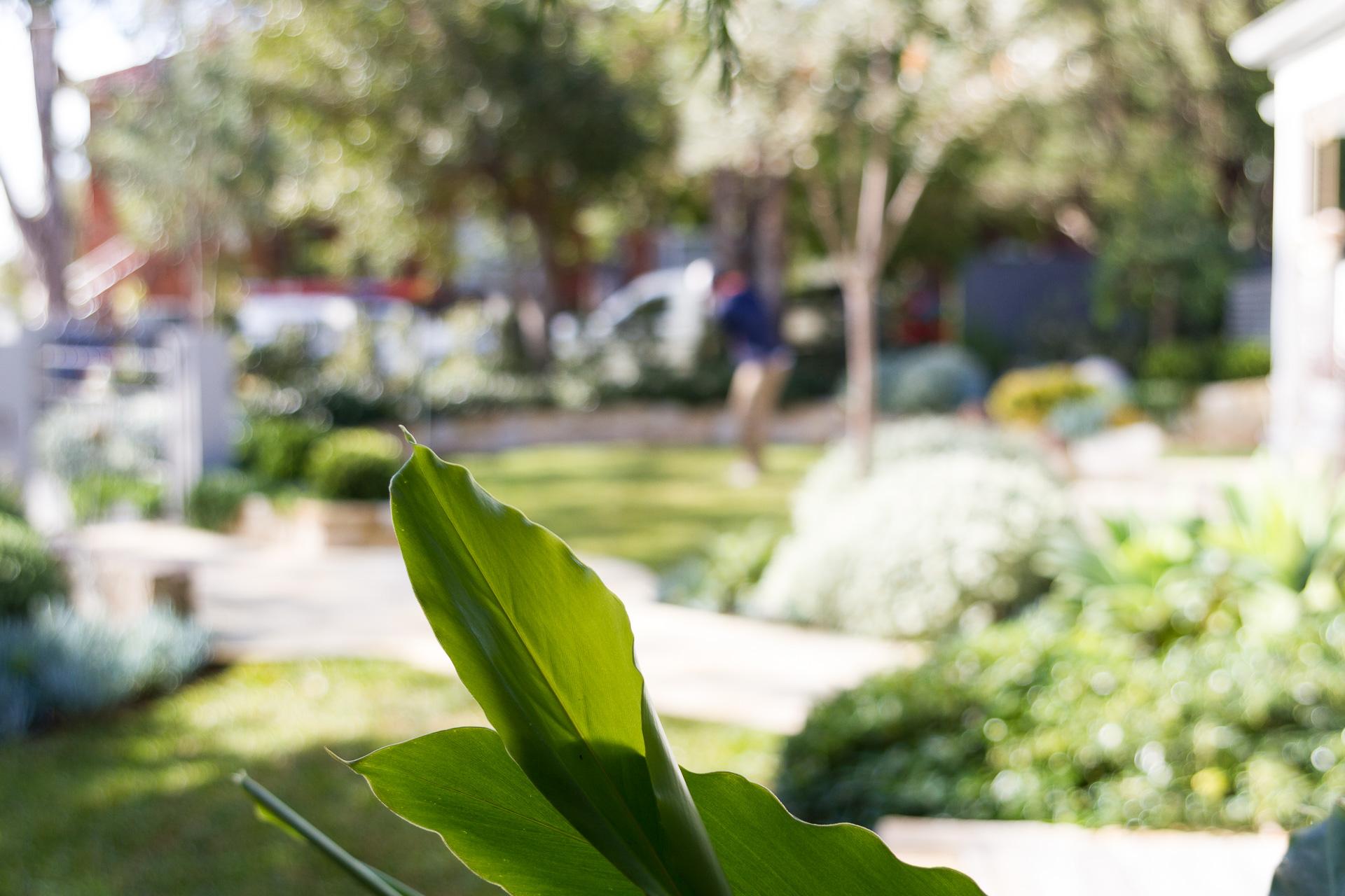 cronulla_residential_garden_design 8.jpg
