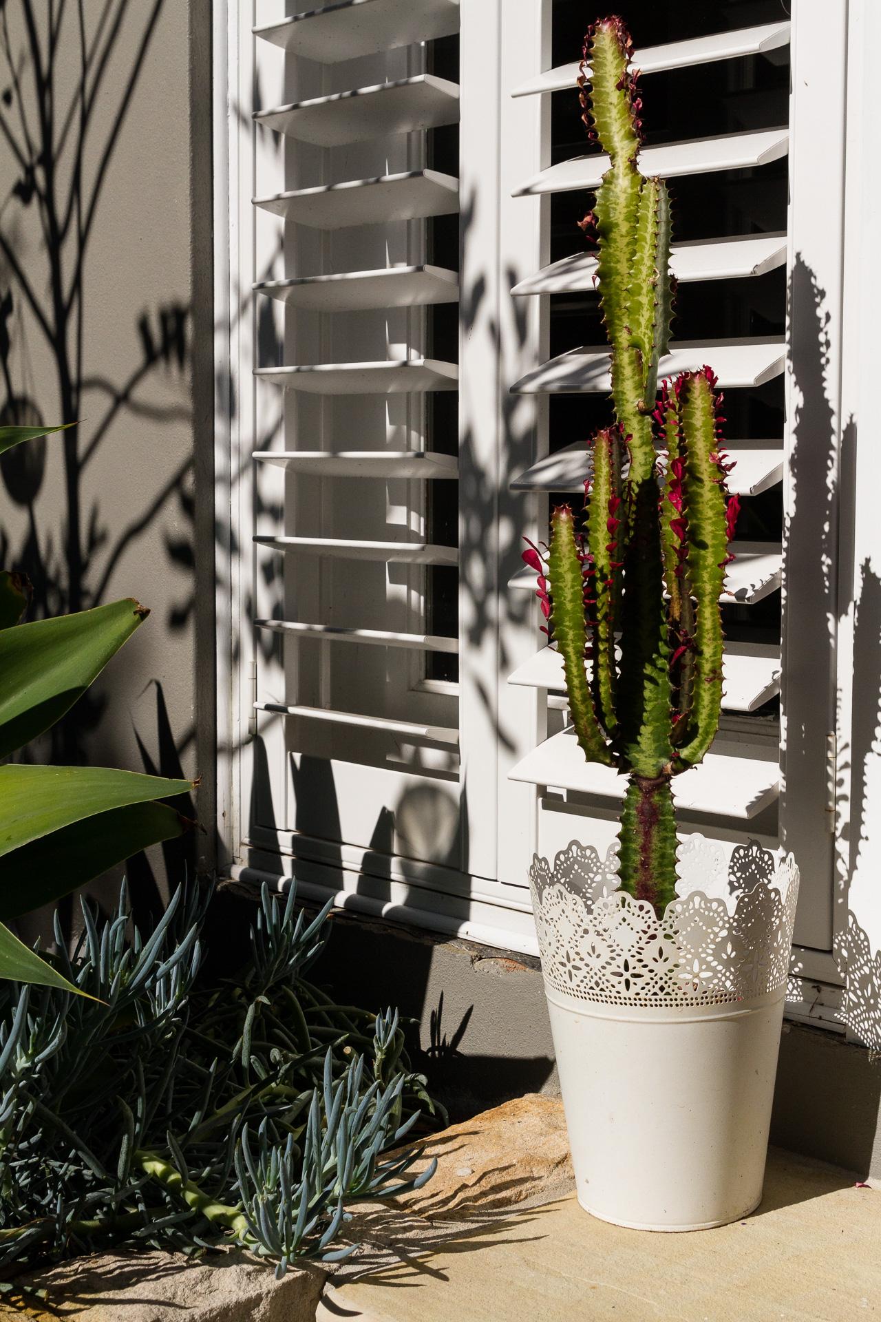 cronulla_residential_garden_design 13.jpg