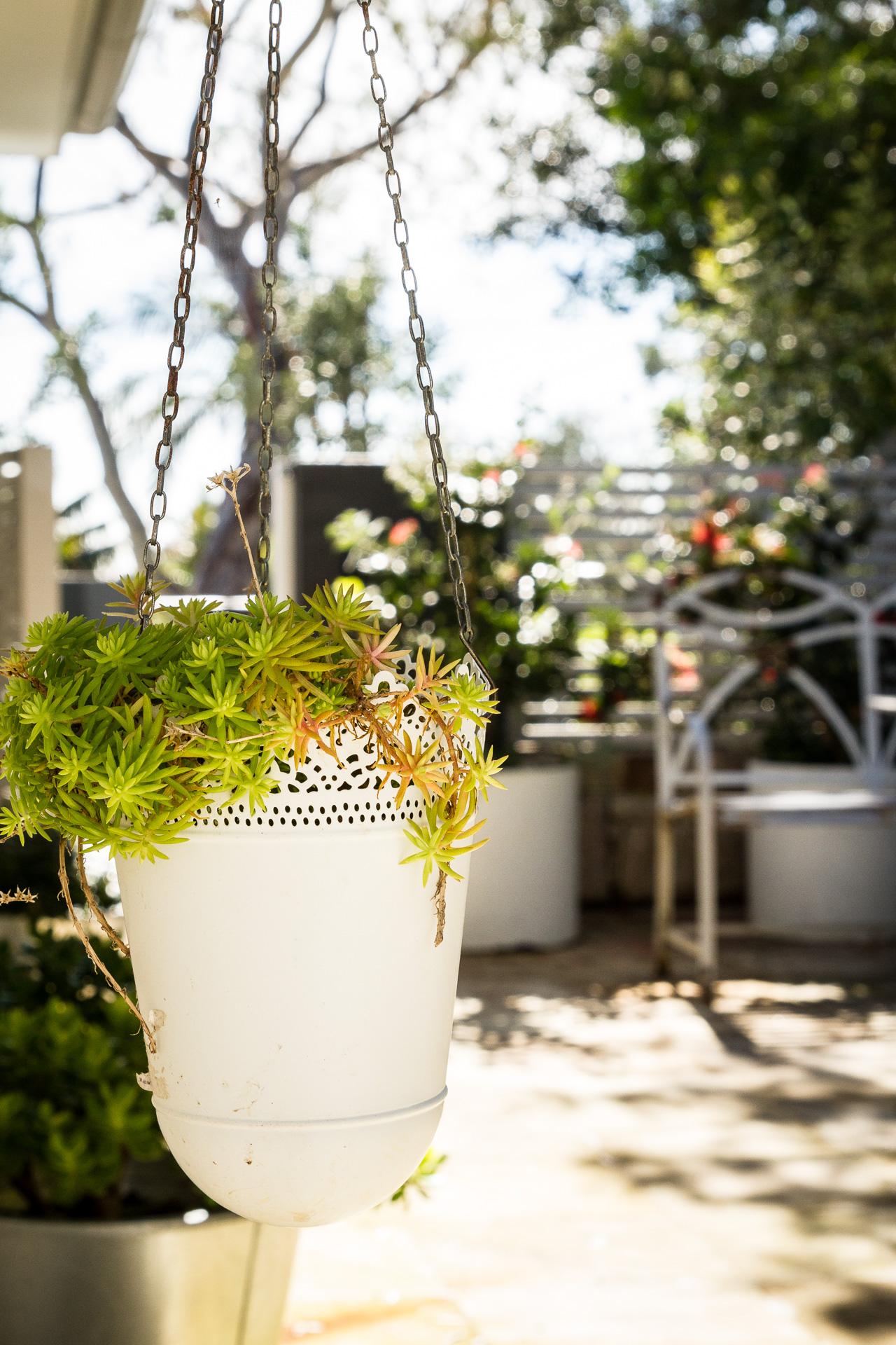 cronulla_residential_garden_design 14.jpg