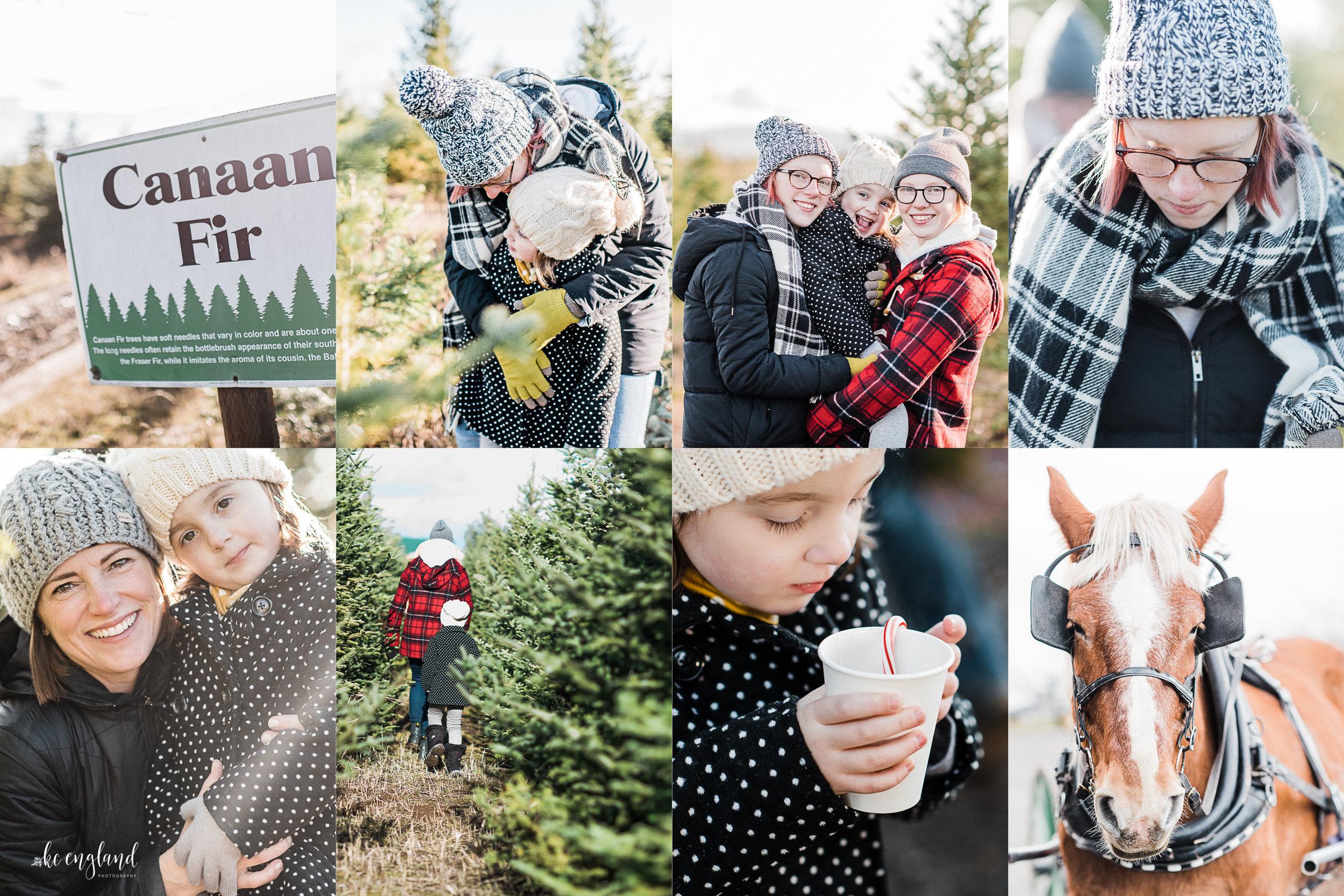 greenbluff-christmas-tree-experience.jpg