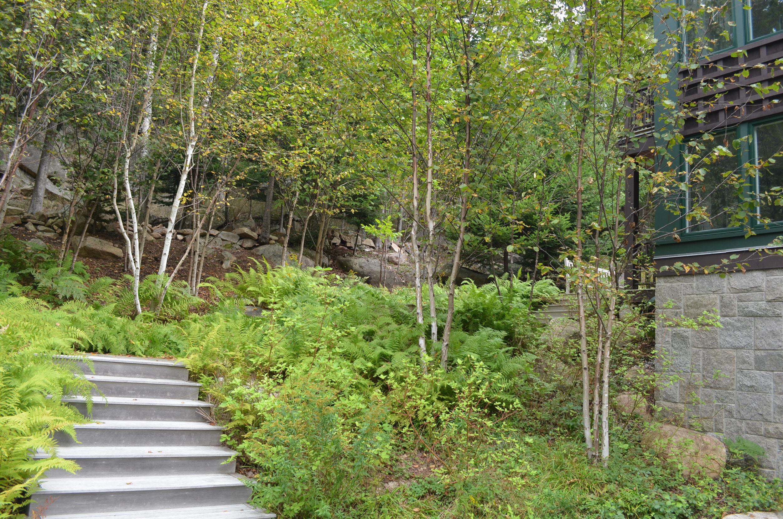 hillside grove