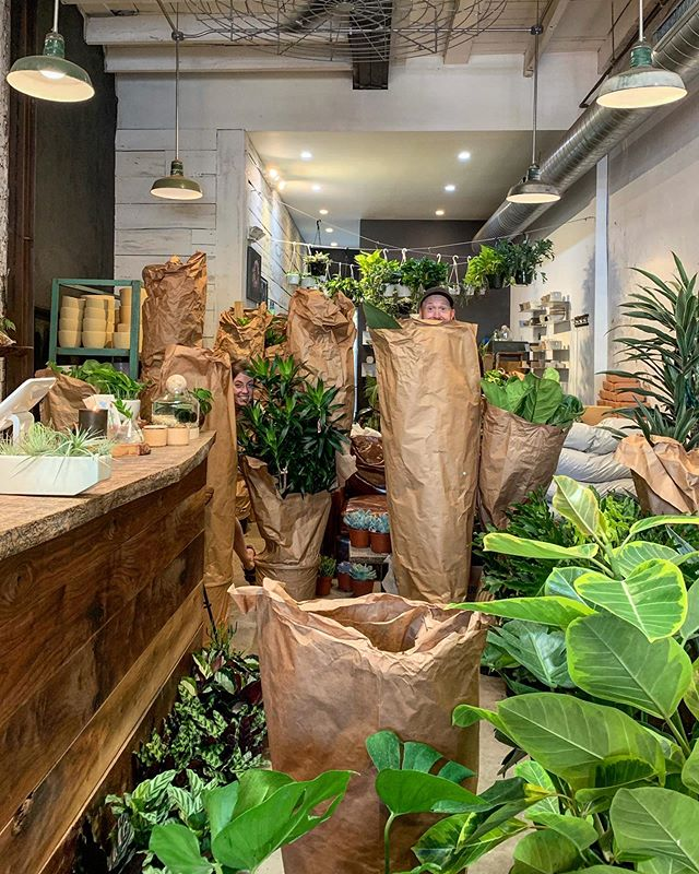 One of those days when it's easy to get lost in the shop. All three shops have a fresh batch of plants just for you! See you this weekend, friends 🌿🕵️♂️🌵