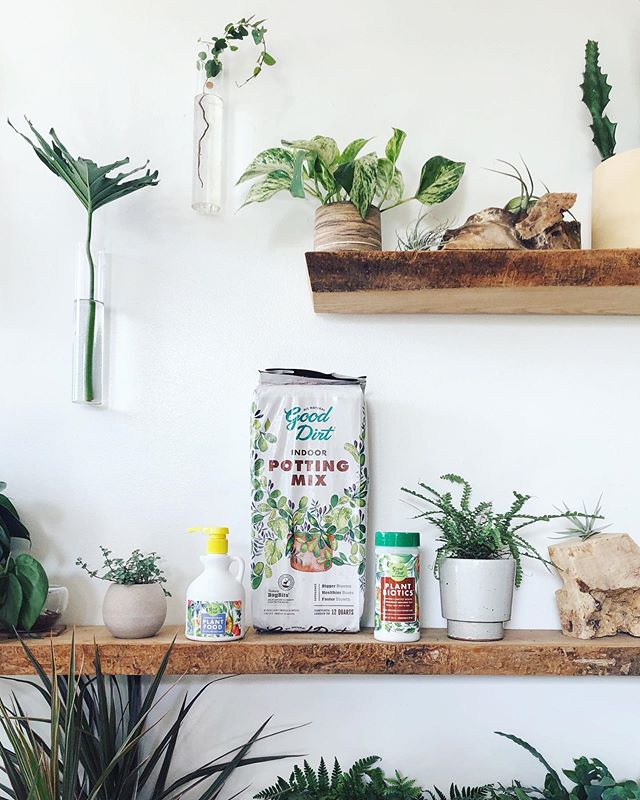 We have several new products in the shops by @good.dirt! Their indoor potting soil, fertilizer & plant biotics will help make sure your plants have the nutrients they need as they grow and mature through the years.