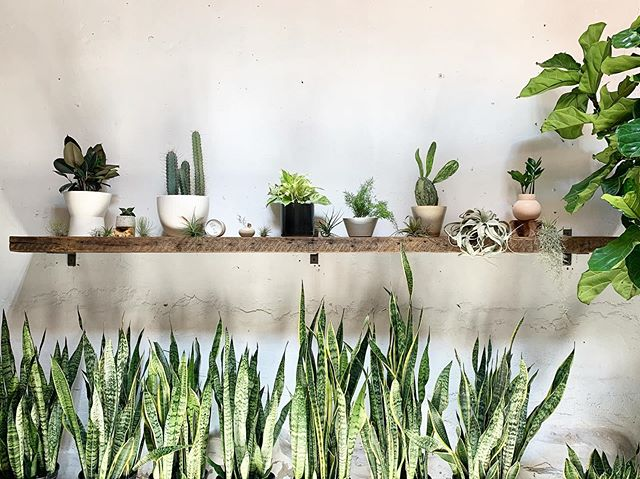 Damn this plant shop is hot! If you've been in our Philly shop recently you probably experienced the heatwave inside as we have been waiting on a warranty replacement AC unit for several weeks! Props to our wonderful team there for their hard work. This photo sums it up #plantinferno 🌿🔥🌵 📷/ @ochre.lake