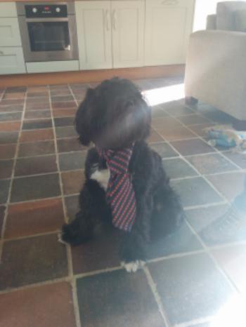 Bobby Tom, Office Dog