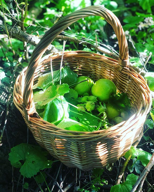 Picking hedgerow bits from the not so glamorous hedgerows of Syston for tomorrow's food demo at @gusto_food - mustard garlic/jack-by-the-hedge (to go with the free range Orchard Farm pork from @w.archer_and_son_ )along with the wild mushroom finds picked yesterday, apples and cob nuts to go with the wild rice risotto. I think I'm doing it early, around 1pm (primarily so I can then drink ale in the sunshine immediately afterwards) come along and say hi if you're in the area, should be another glorious day! ☀️ 😊 #jackbythehedge #cobnuts #boletes #freerangepork