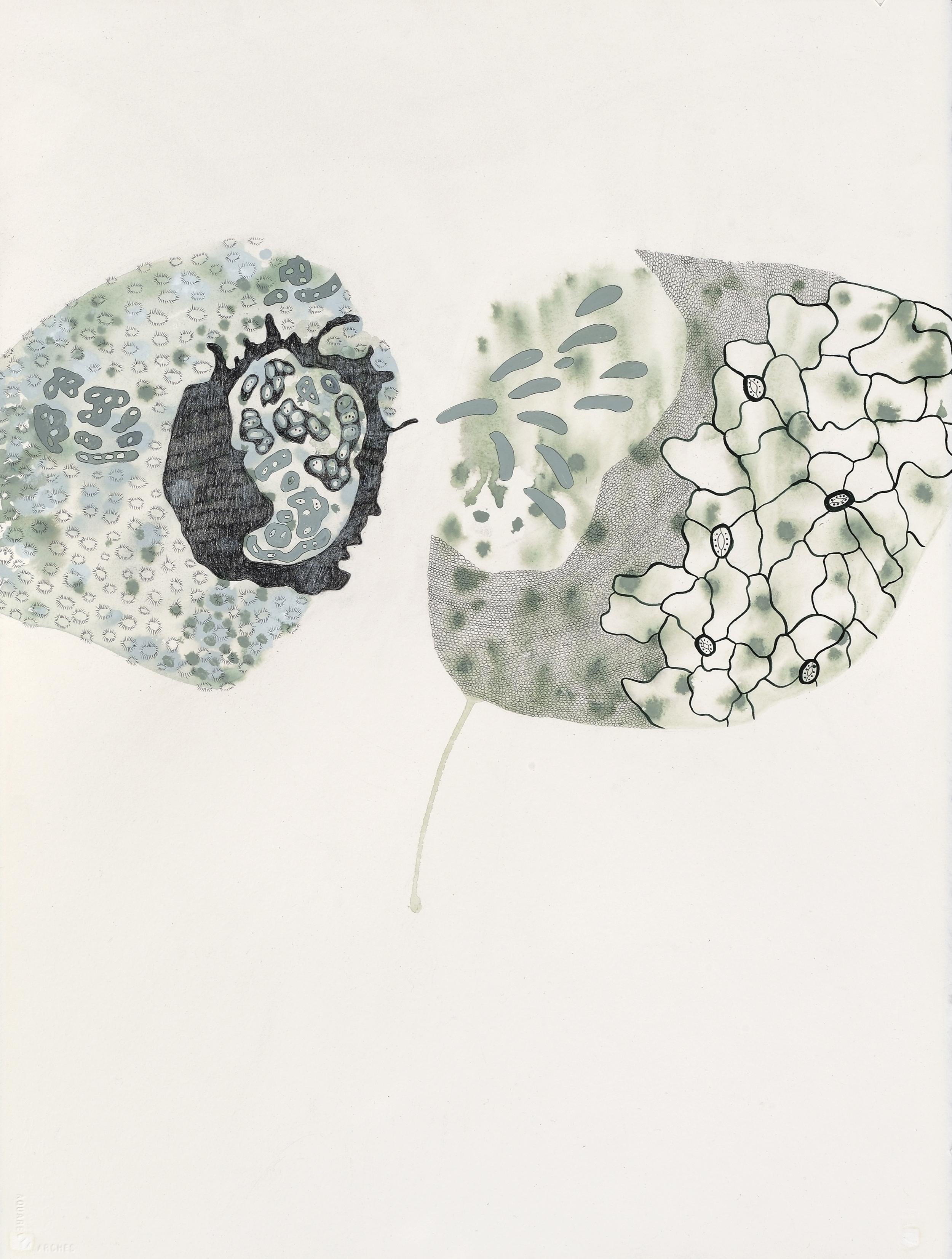 "Exotic Introgression, gouache, graphite on paper, ""30 x 22"", 2010"