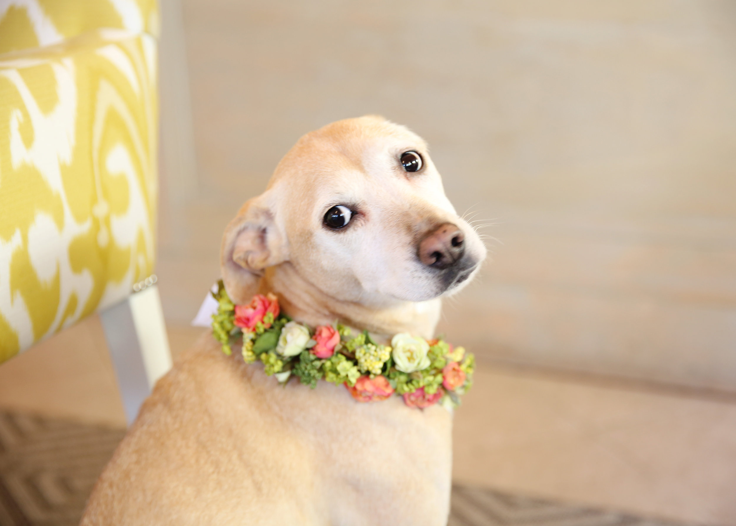 NYC and NJ based lifestyle photographer Jennifer Lavelle Photography -  lifestyle, interiors, branding.  Bloomers Designs in Chatham, NJ for Life in a Train Town, dog with floral wreath