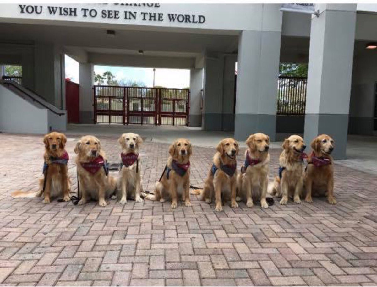 therapy dogs await students returning to stoneman douglas high school after the mass shooting that occurred on february 14, 2018.  photo credit: totally buffalo