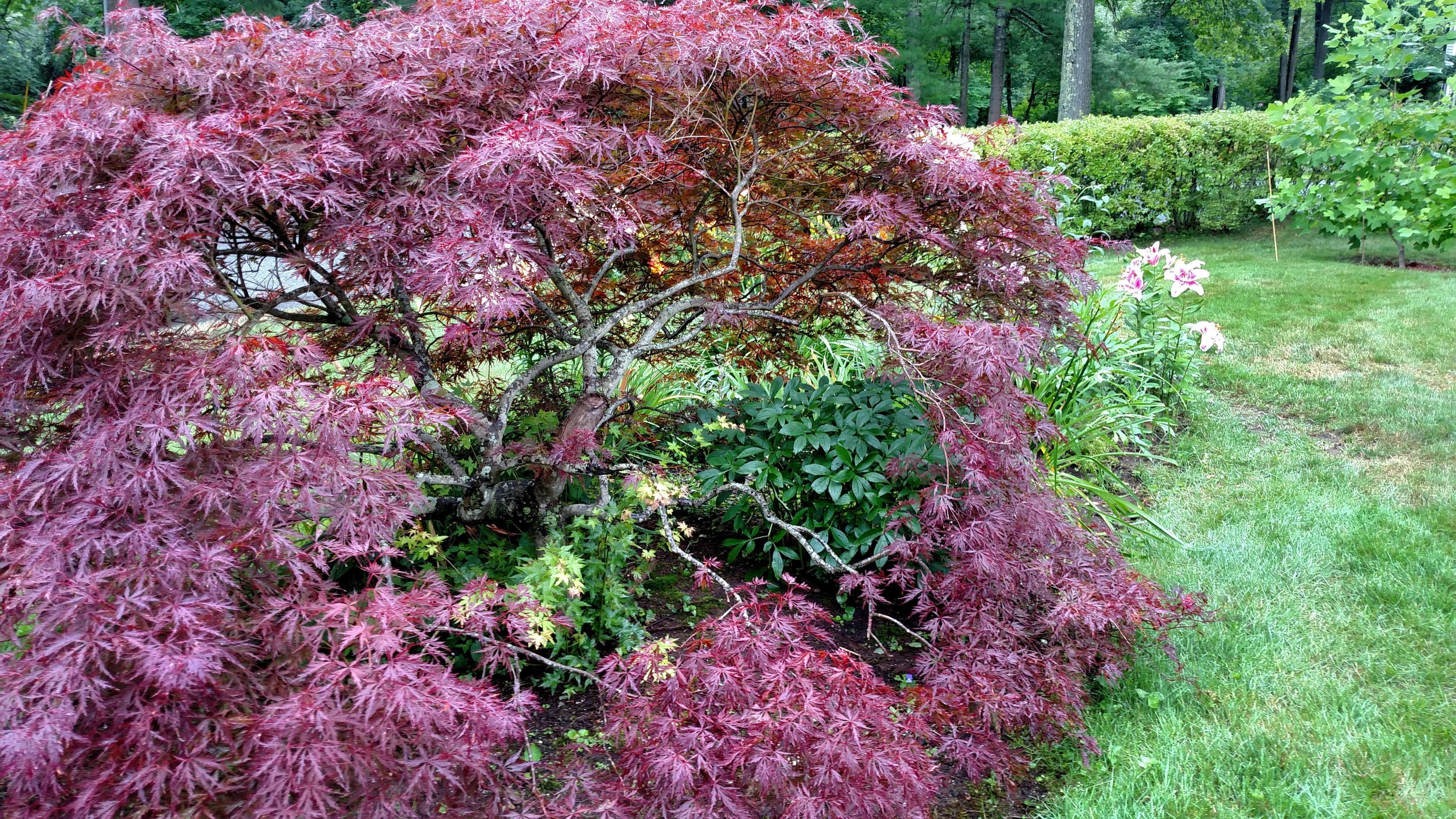 7-20-18 Shapiro Garden 3.jpg