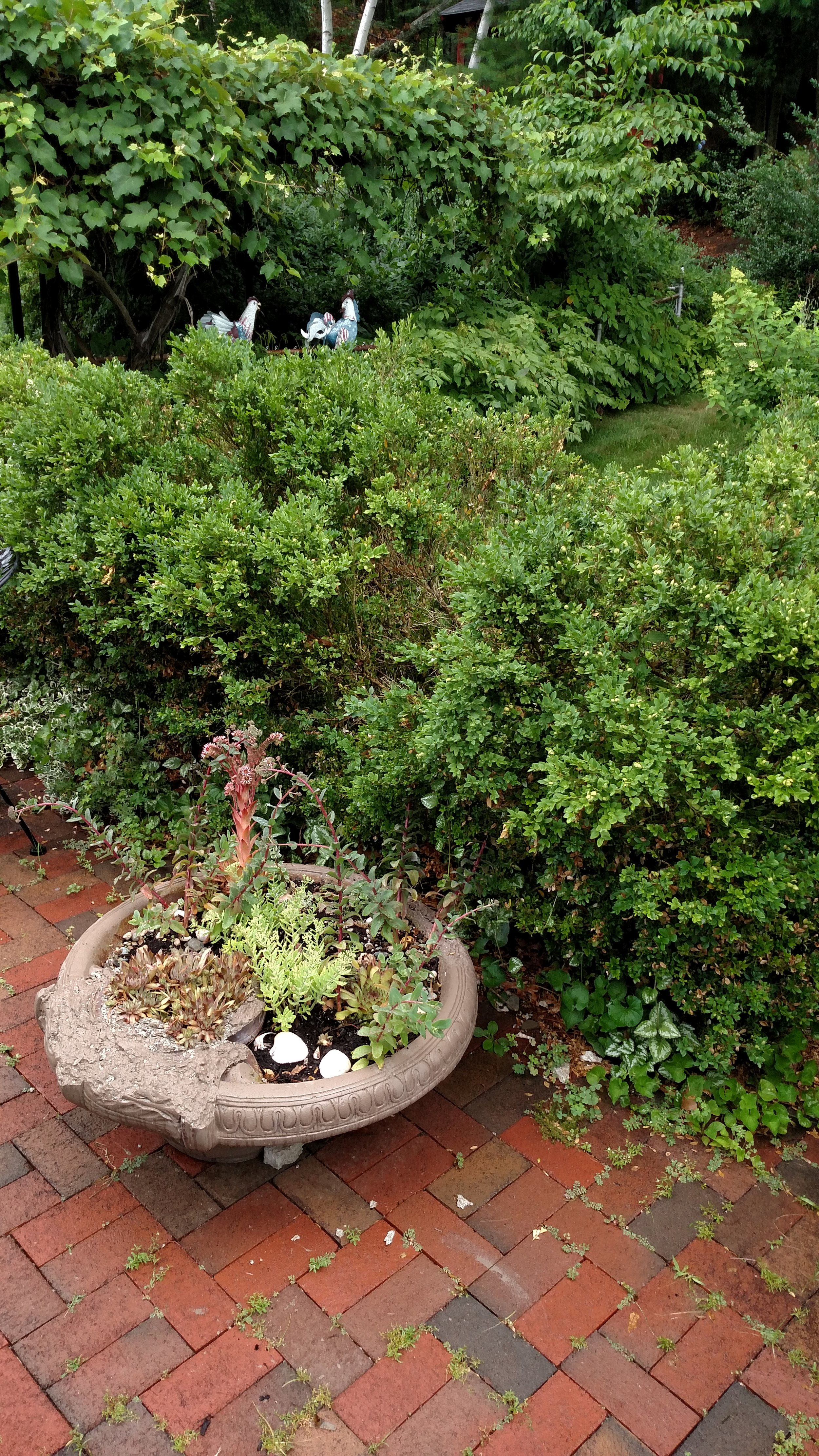 7-20-18 Shapiro Garden 14.jpg