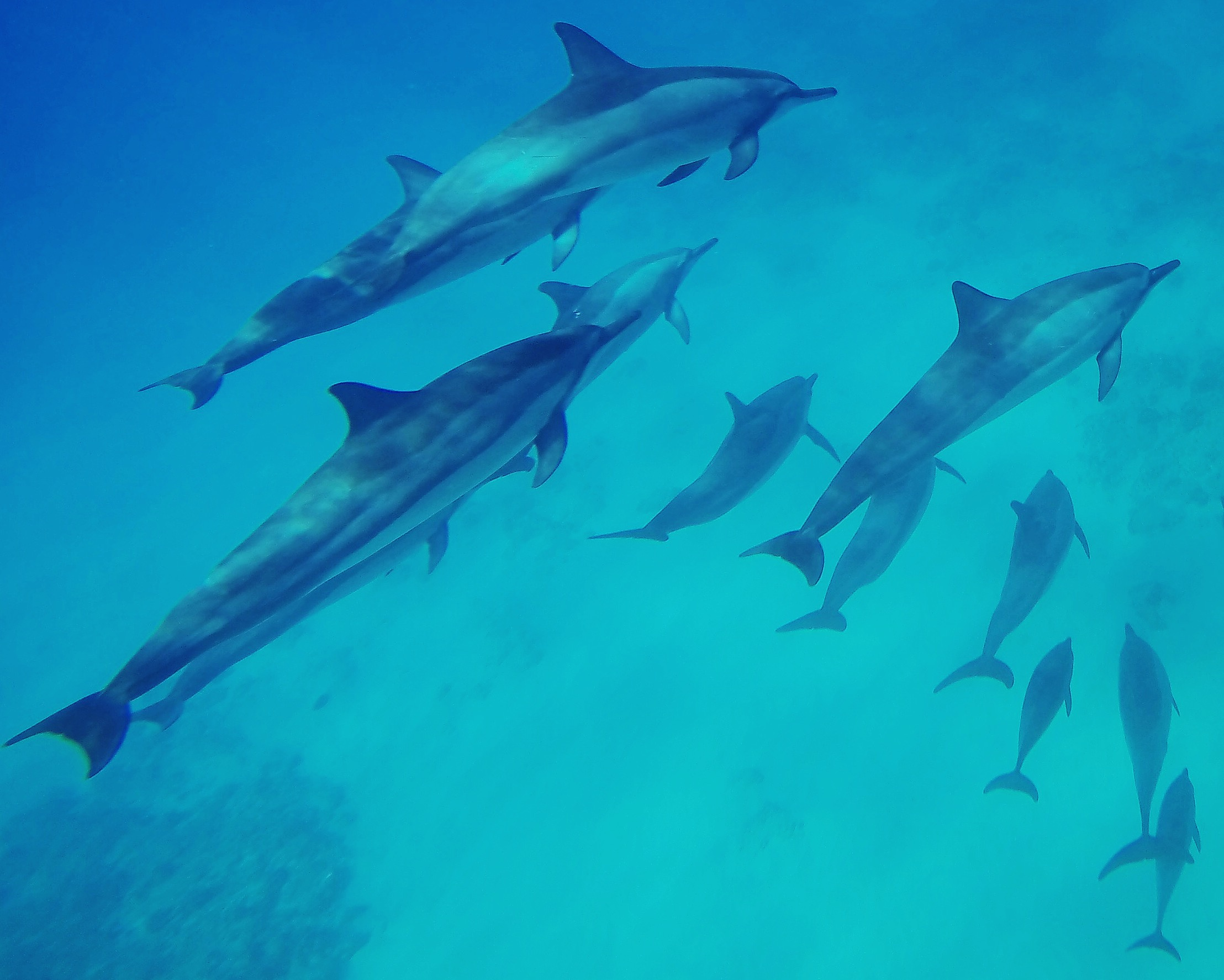 Dolphins in Oahu, HI shot with a GoPro