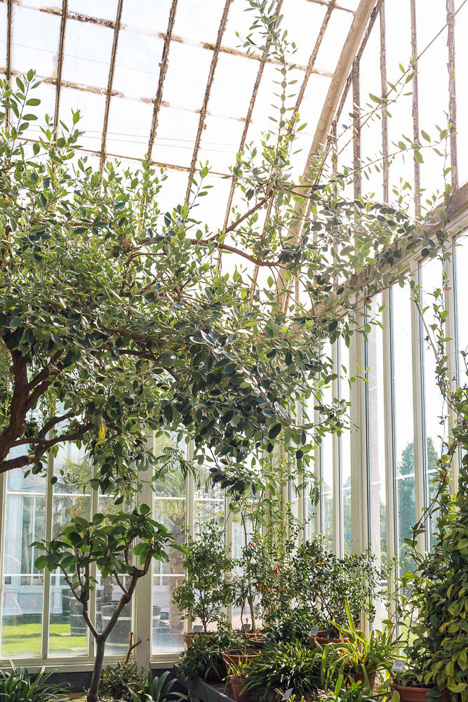 The most Instagrammable spot in Gothenburg, Sweden - the Palm House inside the Garden Society