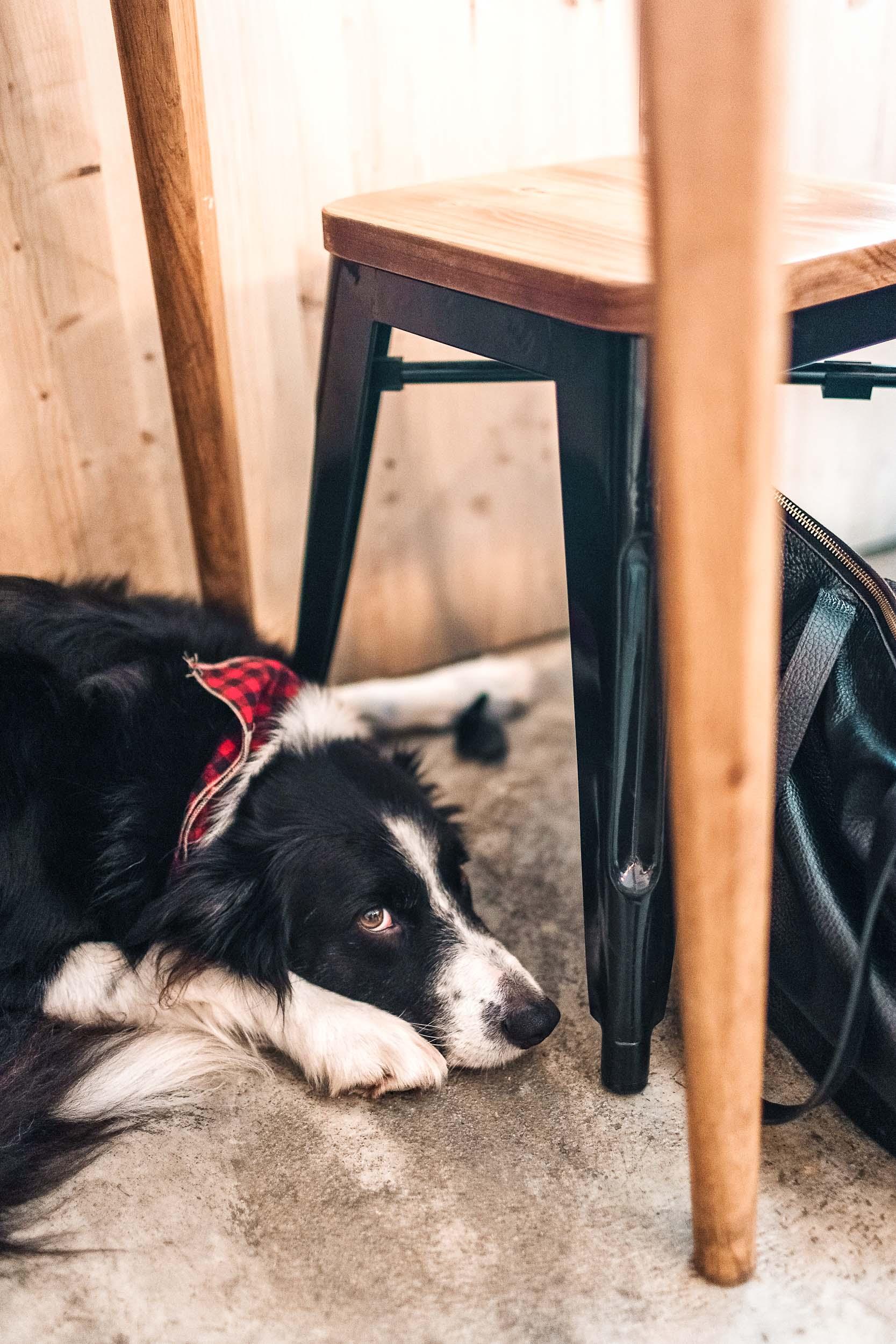 Hello, Kristof in Lisbon is a dog friendly specialty coffee shop!