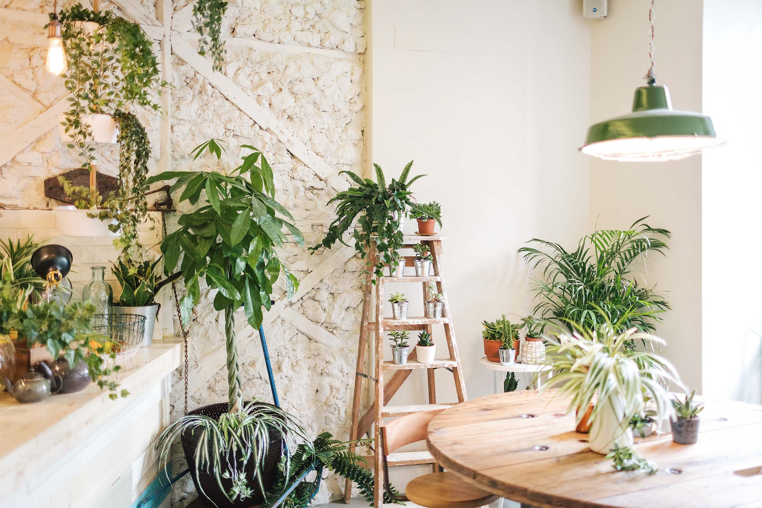 Where to eat in Lisbon, Portugal: Fauna & Flora
