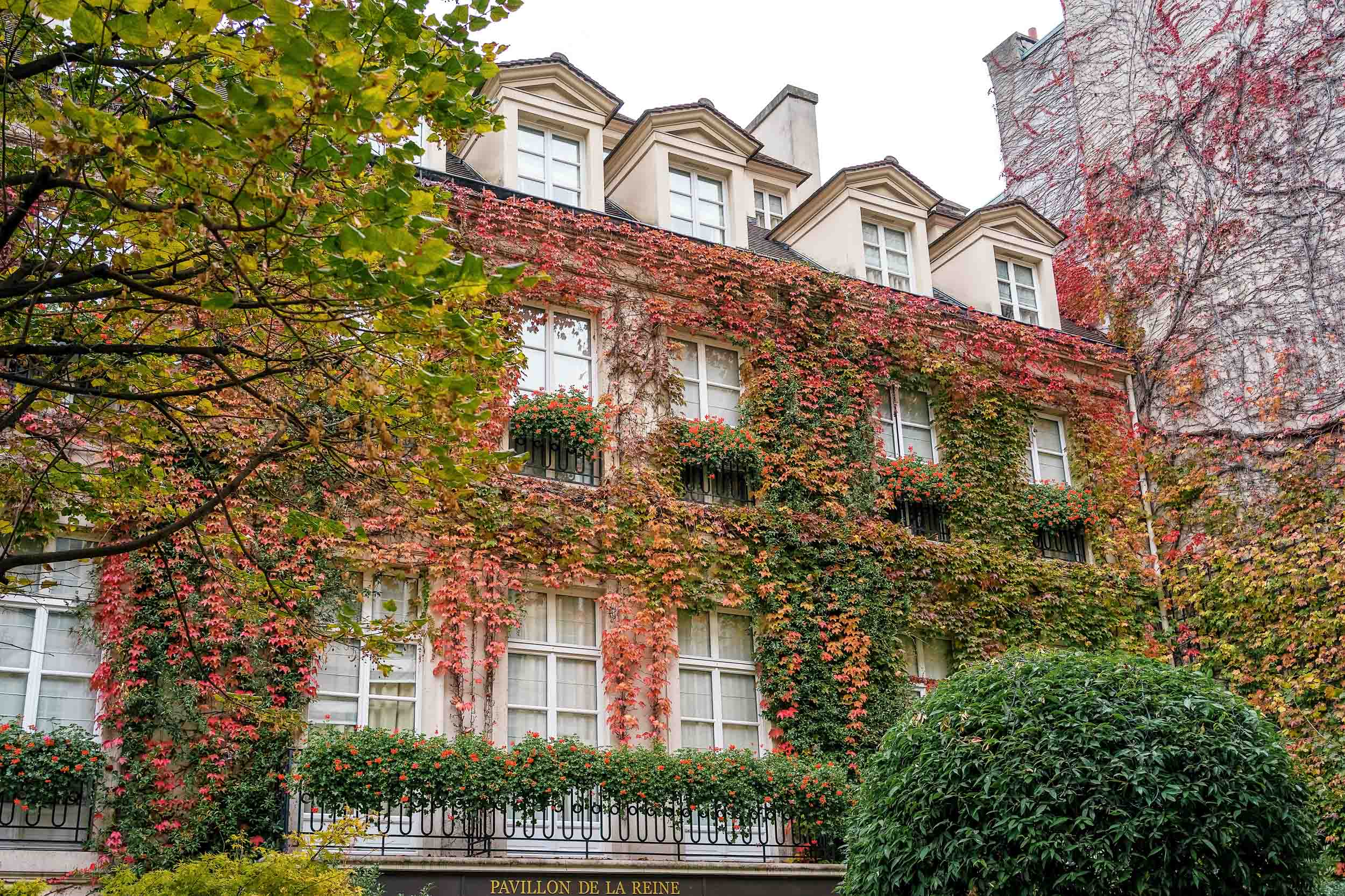 I personally find autumn in Paris to be especially lovely, even in November when it's almost wintertime