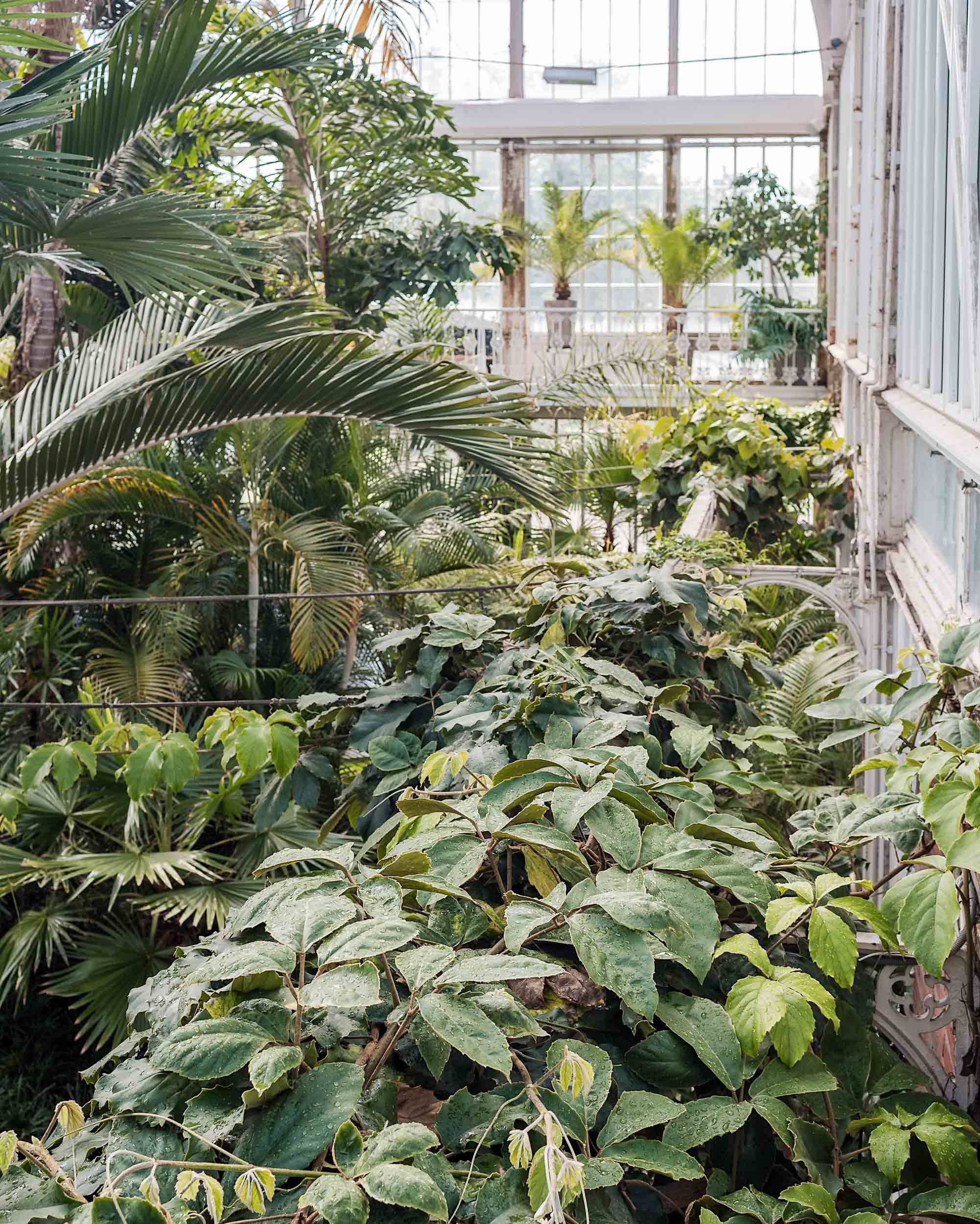 Inside the Palm House in Gothenburg