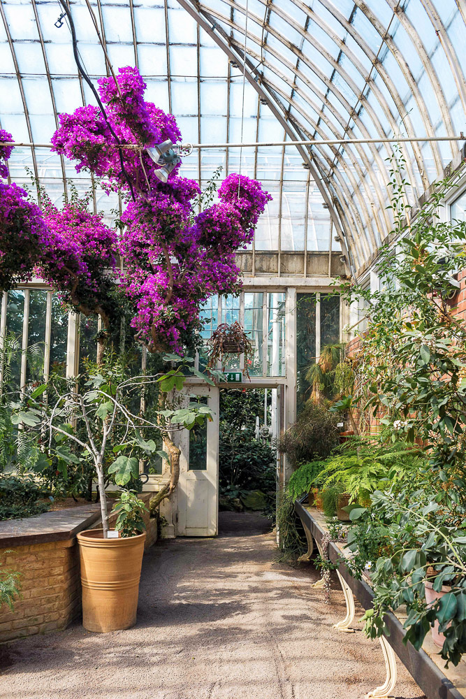The Palm House greenhouse in the Garden Society of Gothenburg