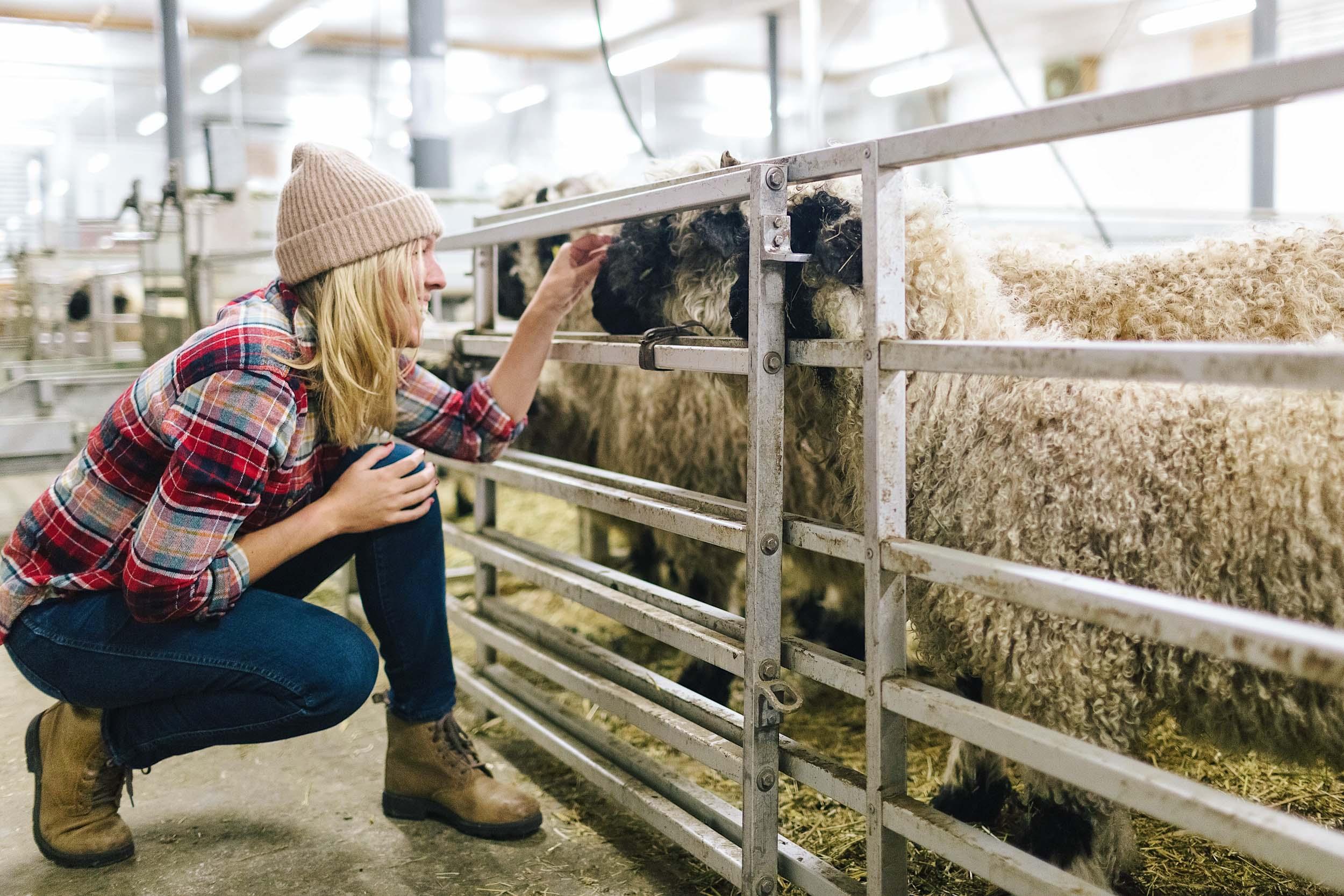Visit a Traditional Black Nose Sheep Farm in Zermatt