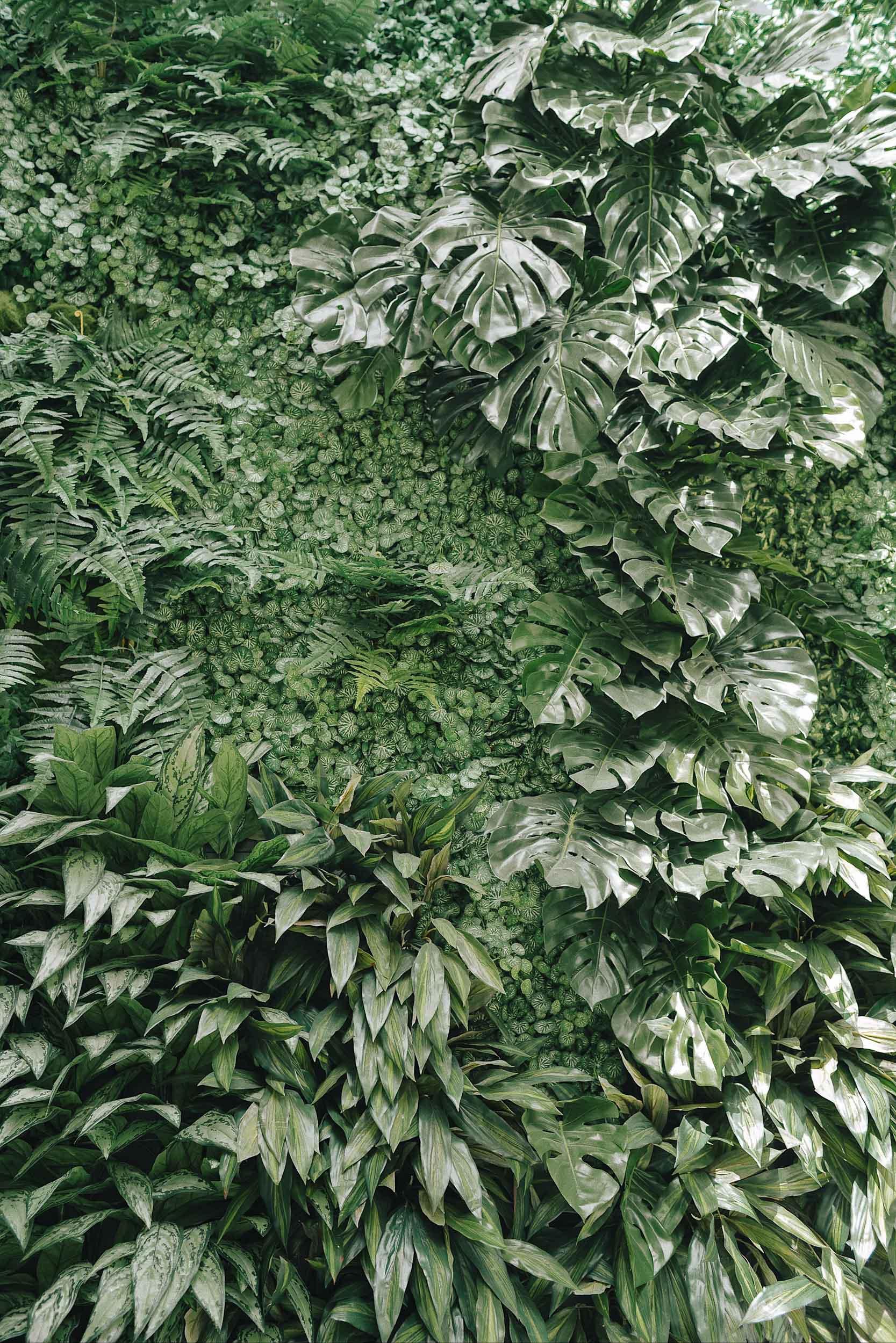A pretty plant wall at The Hoxton Paris