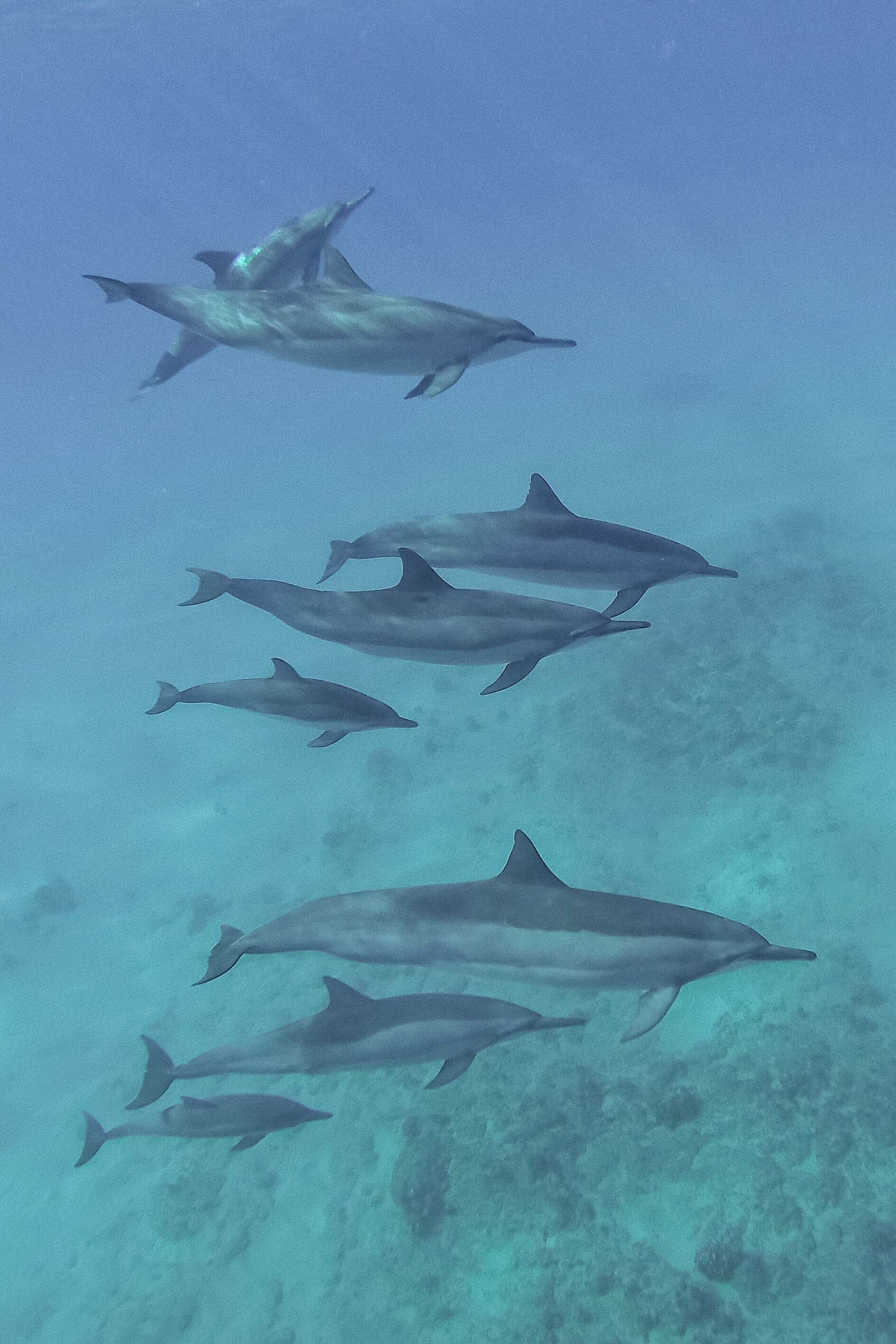 Swimming with dolphins in Waianae on the westside of Oahu, Hawaii.  A can't miss experience!