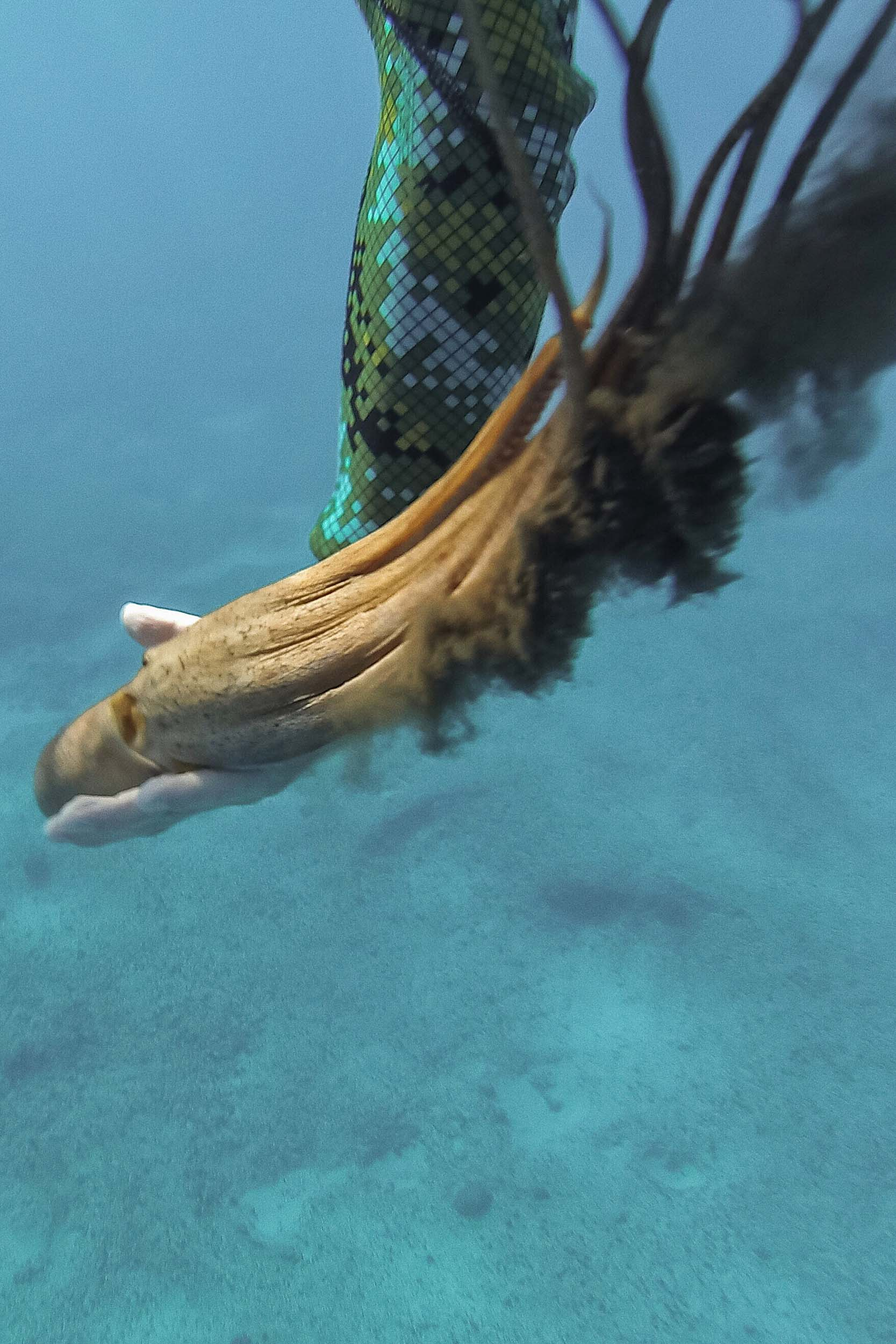 A squid we found in the ocean while swimming with dolphins in the wild in Hawaii