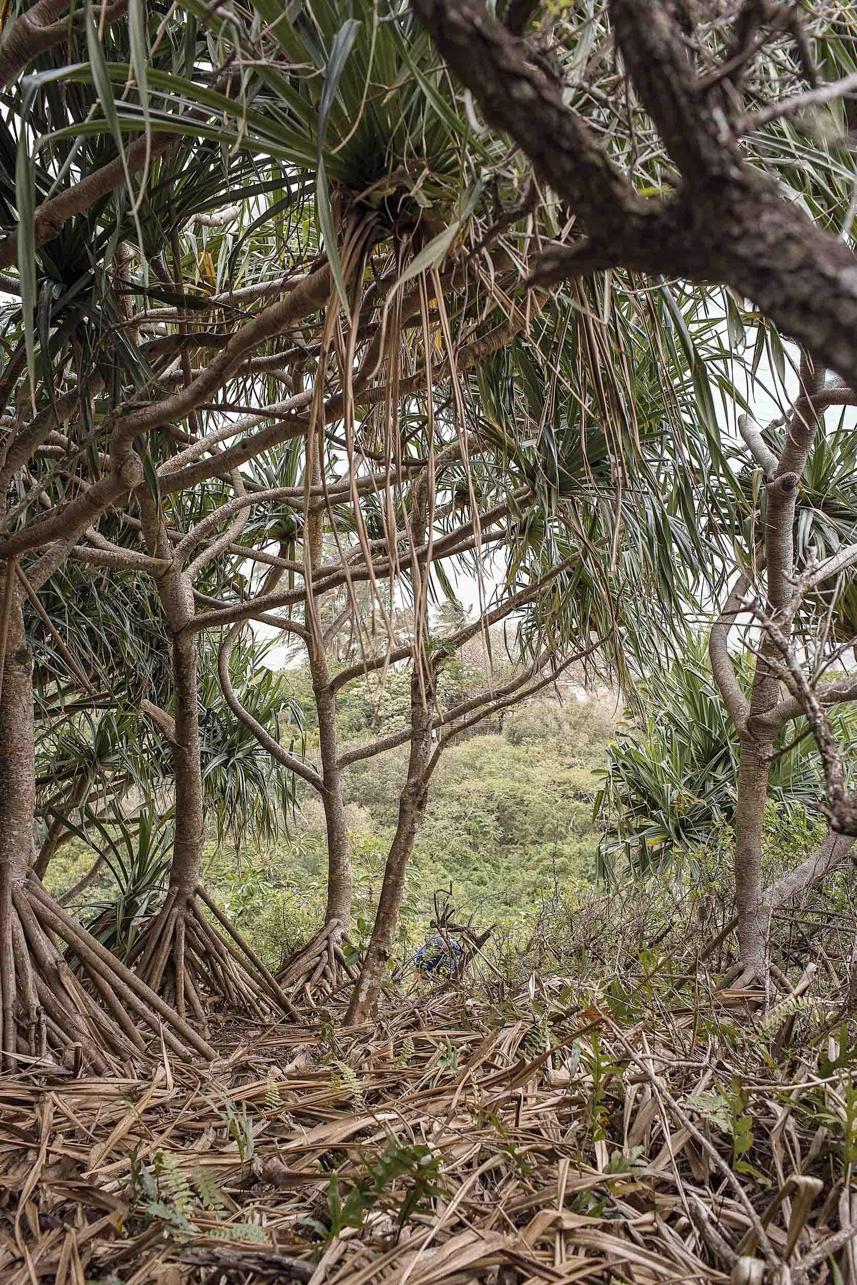 Crouching Lion Hike