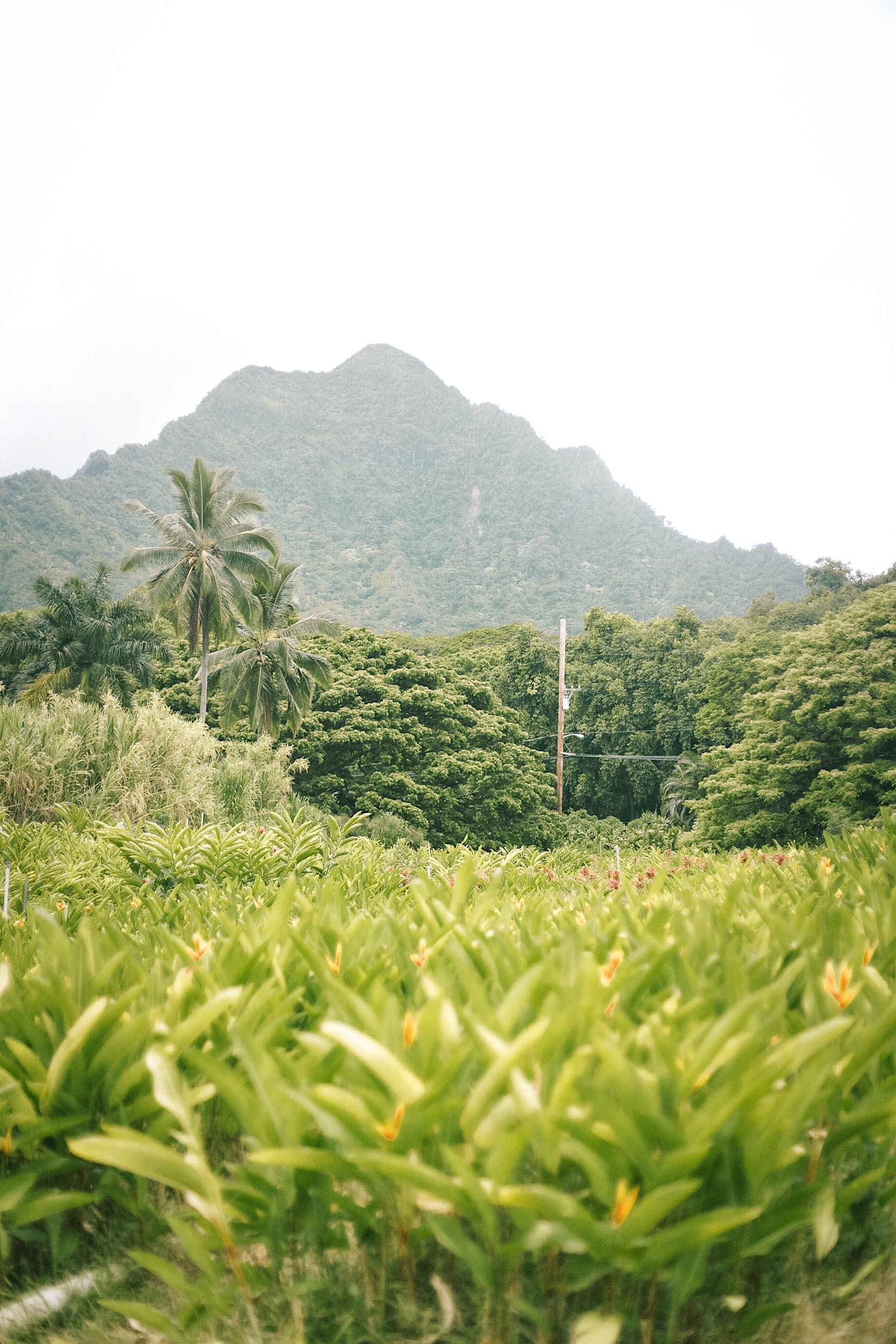ckanani-hawaii-65.jpg