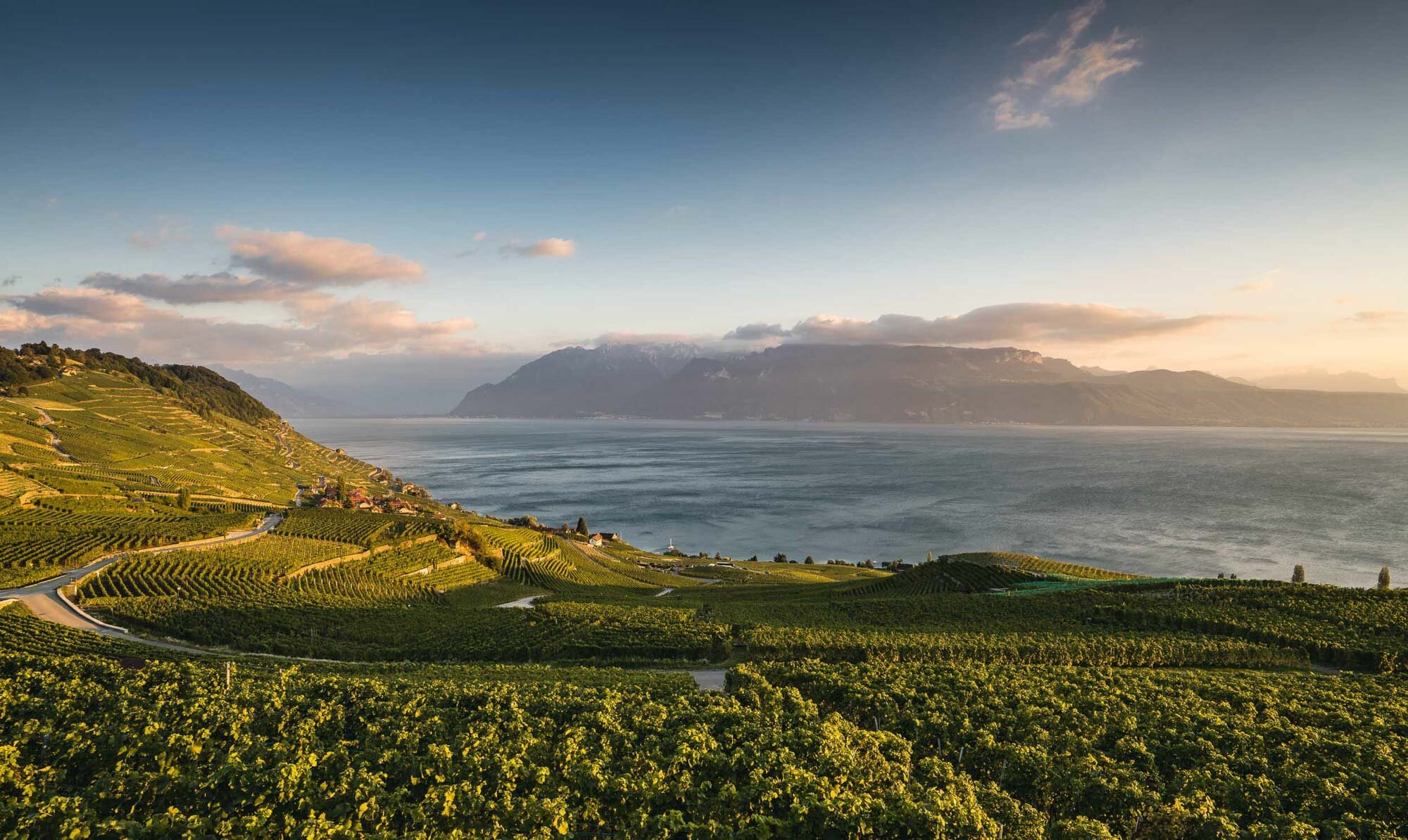 View from the Lavaux near Chexbres with evening atmosphere.  Copyright by: Switzerland Tourism