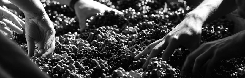 hands_in_grapes copy.jpg