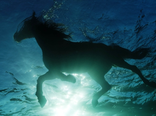 Horse Swimming, Malta