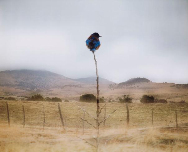 photo by Jean-Luc Mylayne