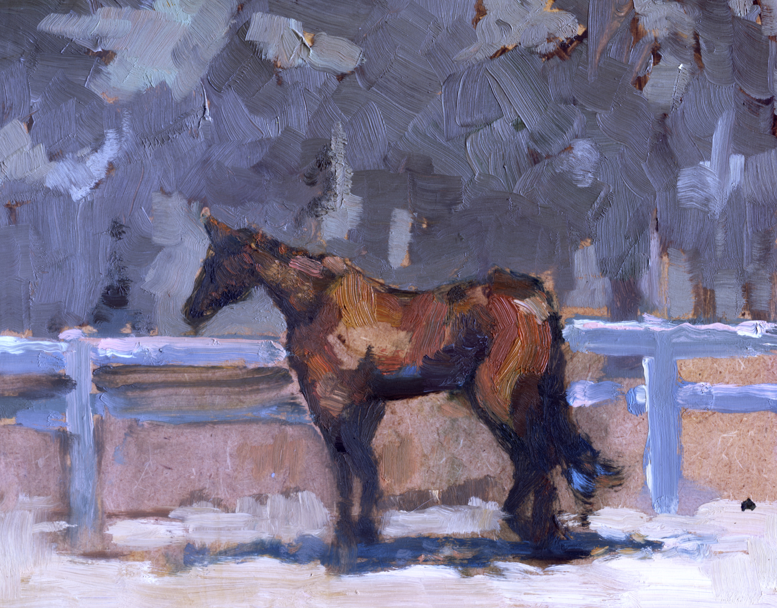 horse with blue fence
