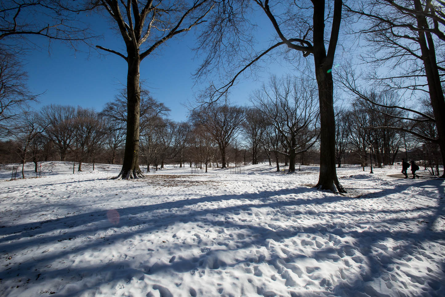 New York City, Prospect Park