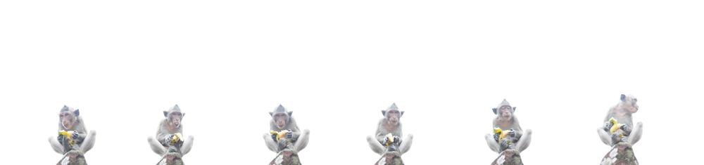 6_monkeys.jpg
