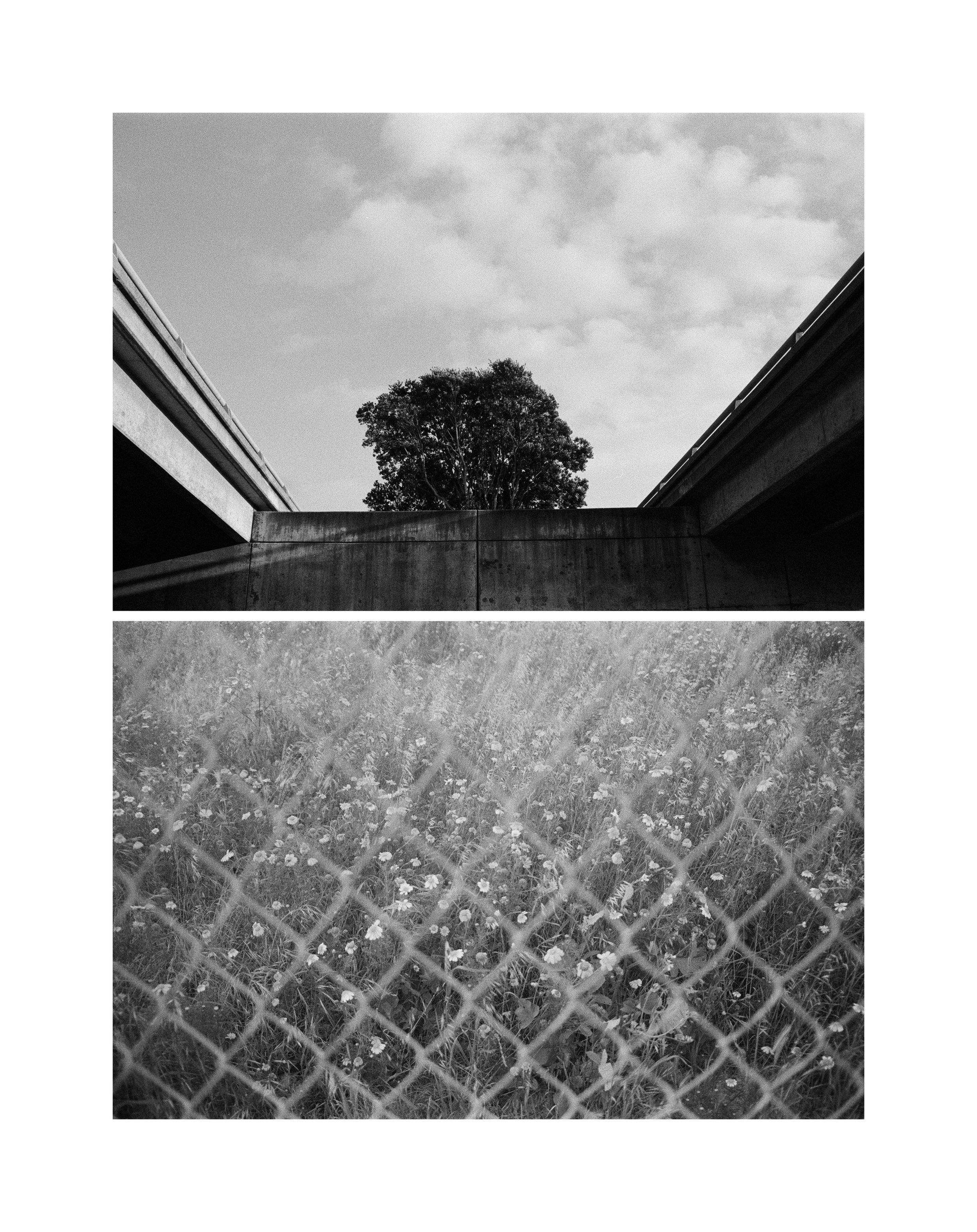 Pacifica_Film_1.jpg