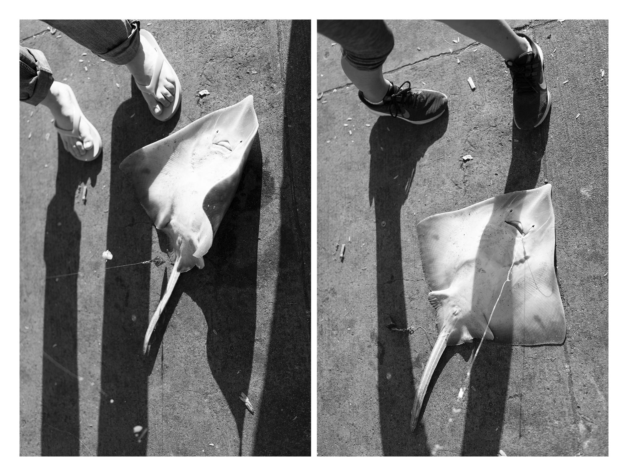 skate_shadows.jpg