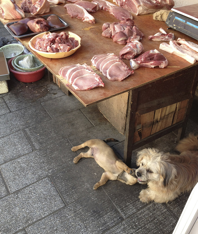 dogs and meat.jpg