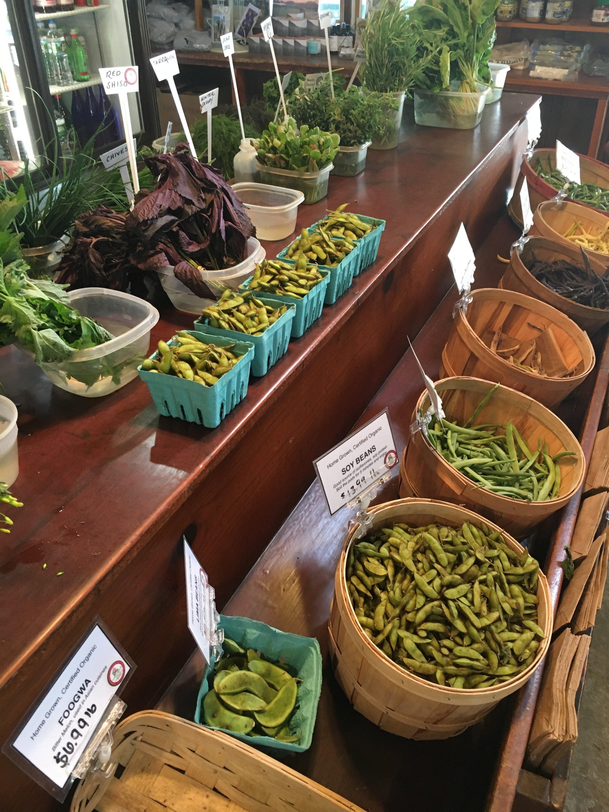 Hamptons gren thumb herbs etc.JPG