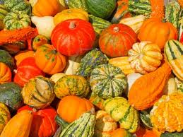 pumpkin assortment.jpg