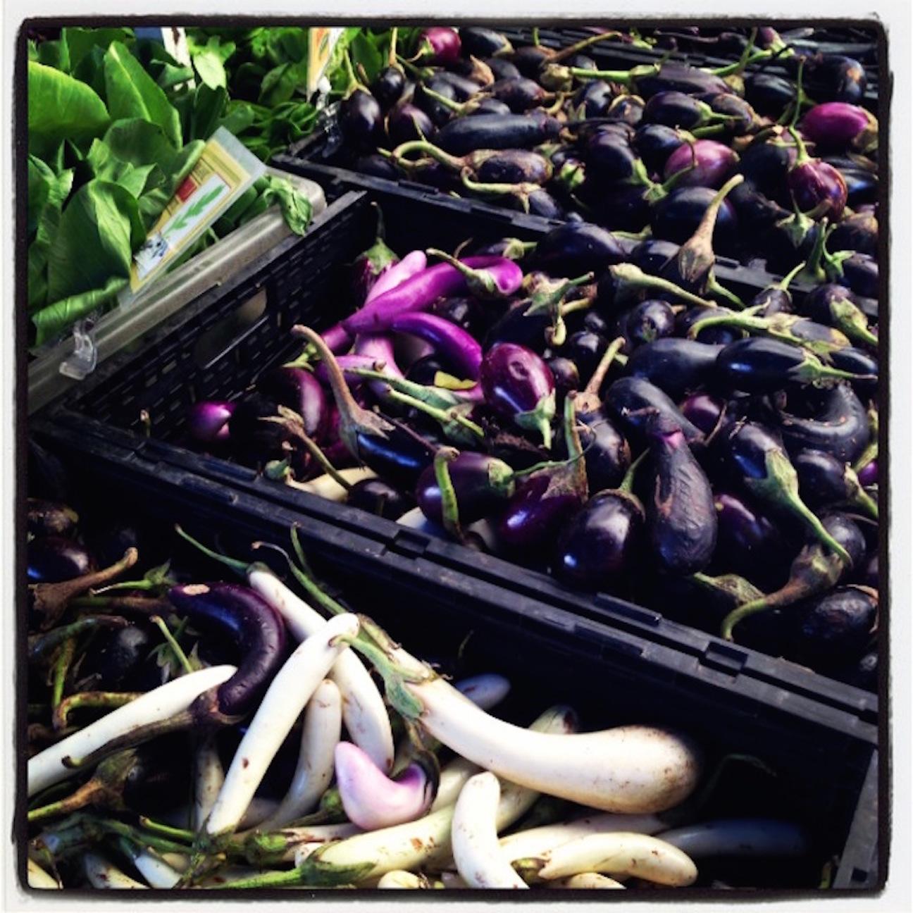 eggplant square.JPG