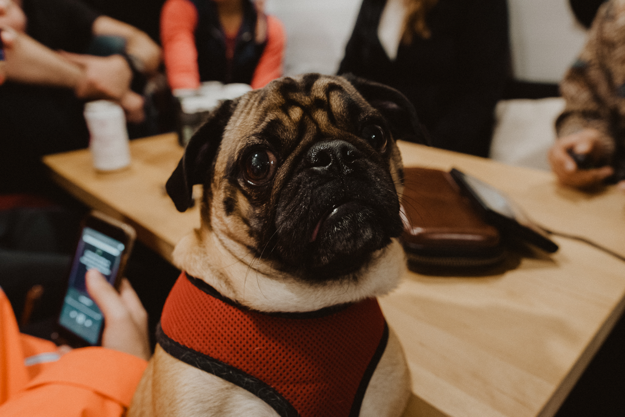 Cutest pug, owned by our super talented photographer friend, and van lifer:  https://marievanderpoolphotography.com/