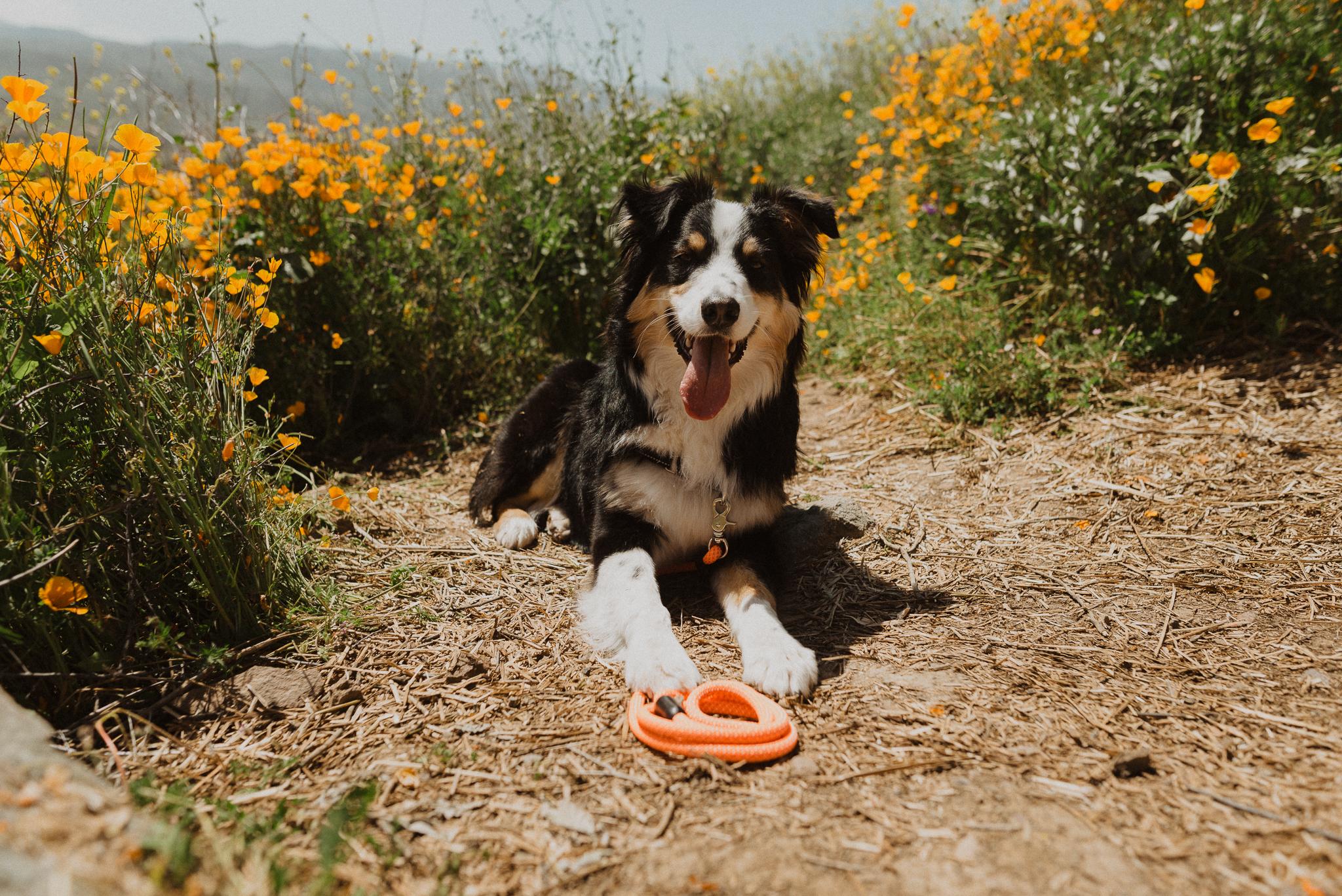 californiaadventurephotographer-2.jpg