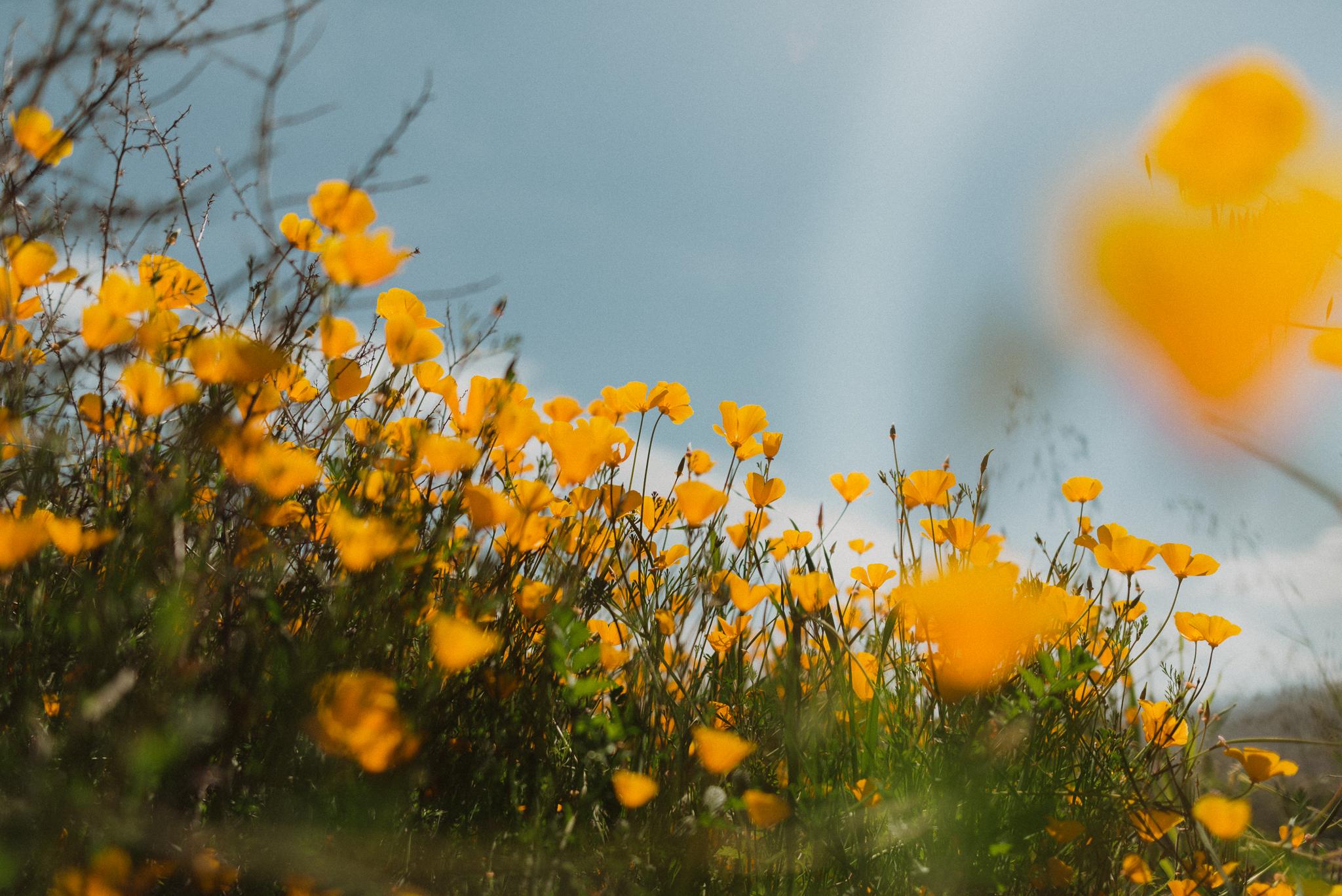 californiaadventurephotographer-6.jpg