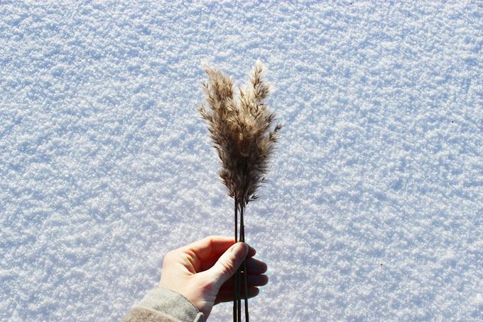 vinterdag.jpg