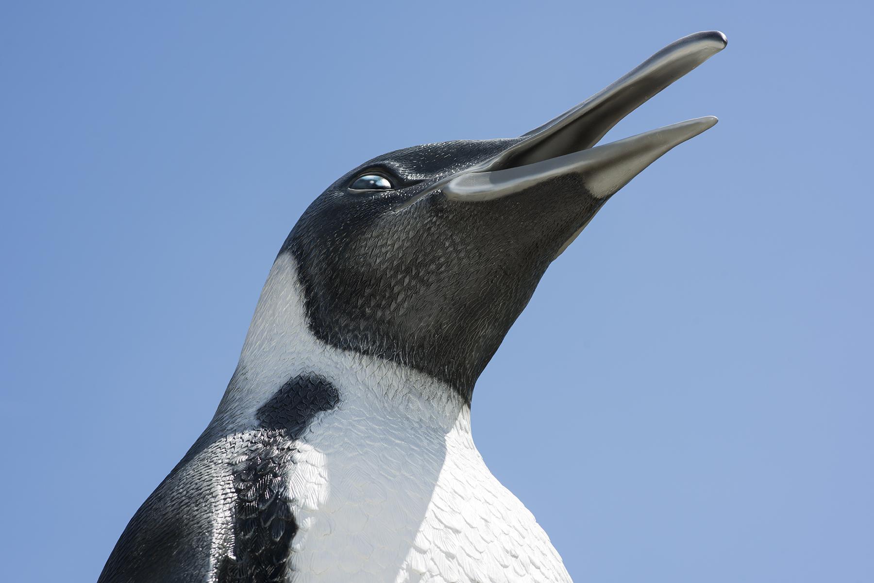 penguin-04.jpg