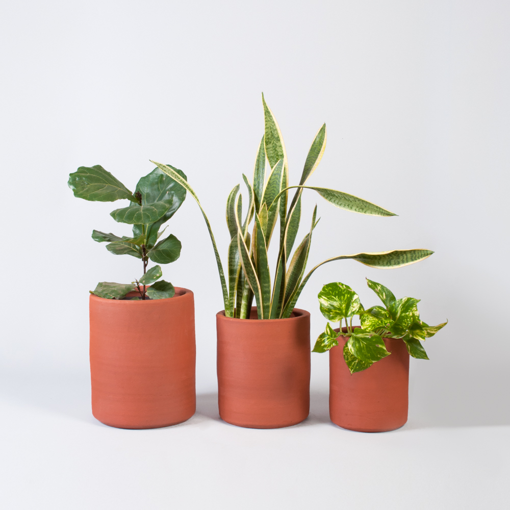 clay pot buy adelaide Cylinder Terracotta Pots — EMMA SADIE THOMSON - EST - Plant Stylist